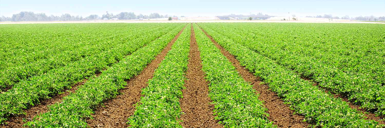 Cropping Banner